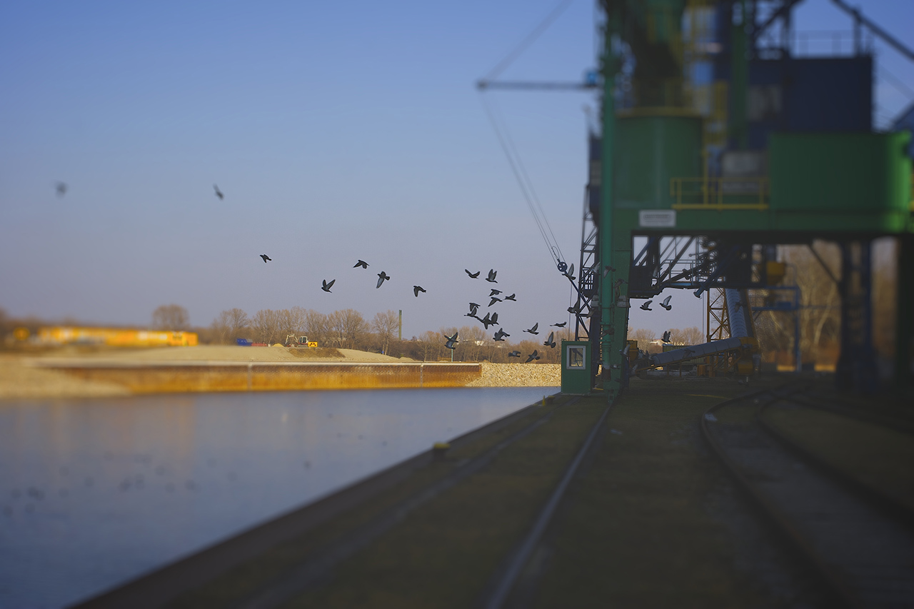 vienna-birds-tiltshift